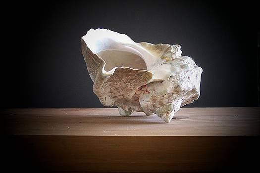 Frank Wilson - Giant Turban Shell