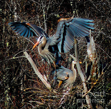 Great Blue Heron by Mim White