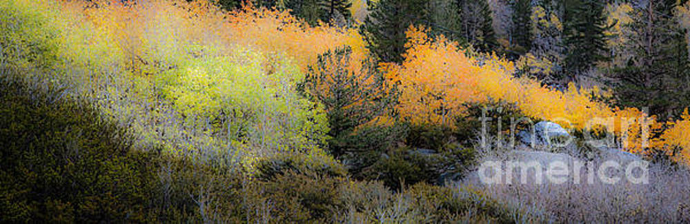 Inyo National Forest by Richard Smukler