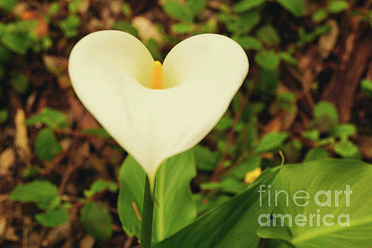 Lily of the Valley by Cassandra Buckley