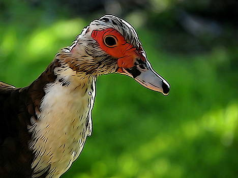 Muscovy Duck by Ines Ganteaume