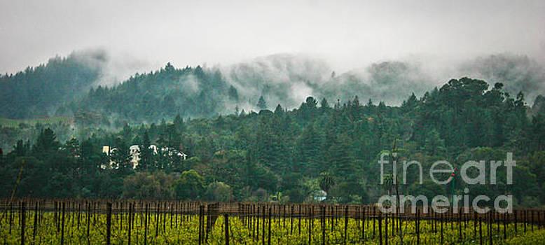 Napa Valley, California by Richard Smukler