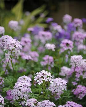 Sumit Mehndiratta - Pink flowers