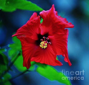 Pretty Red Hibiscus by Craig Wood