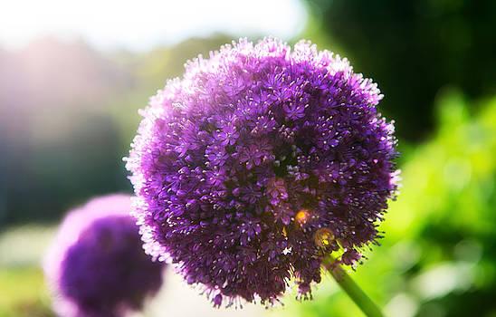 Purple by Alex Land