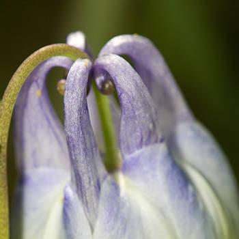 Purple flower by Jouko Mikkola