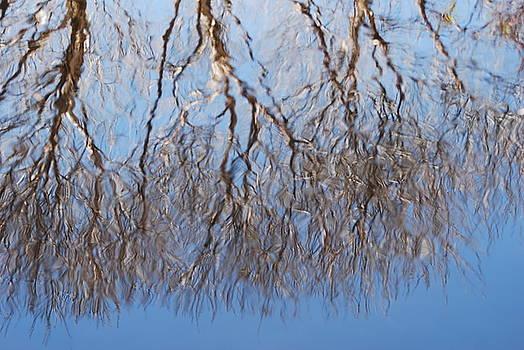 Reflections by Ramona Whiteaker