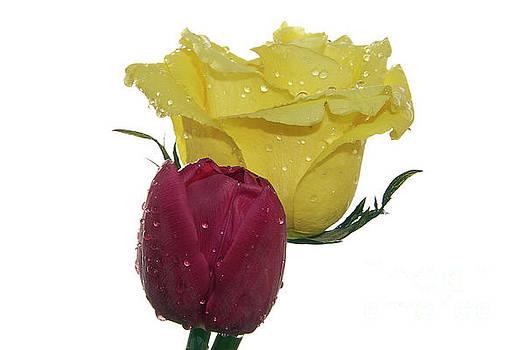 Rose With Tulip by Elvira Ladocki
