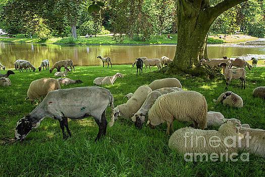 Sheepherd in a park in Groningen, city by Patricia Hofmeester