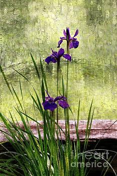 Siberian Iris   by Yumi Johnson