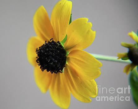 Small Flower by Elvira Ladocki