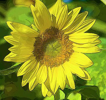 Sunny Sunflower by Kathy Clark