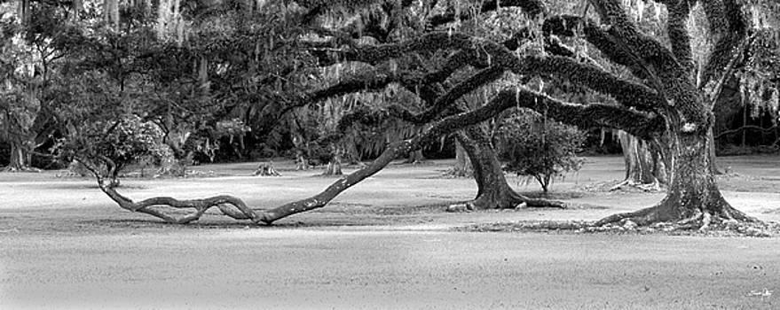 Scott Pellegrin - The Giving Tree
