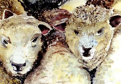 We Like Sheep by Mindy Newman