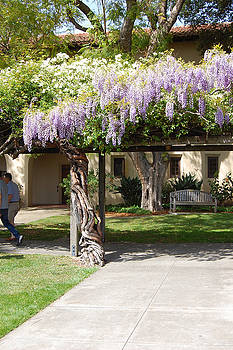 Wisteria Arbor by Carolyn Donnell