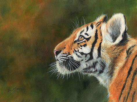 Young Amur Tiger  by David Stribbling