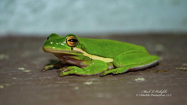 2016 08 01 a frog DSC_0788 by Mark Olshefski