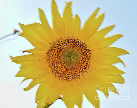 Nice Sunflower by Elvira Ladocki
