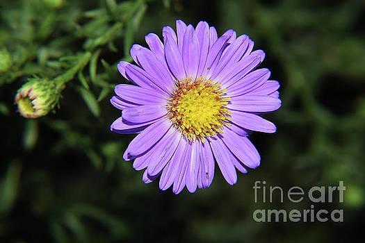 Purple Flower by Elvira Ladocki