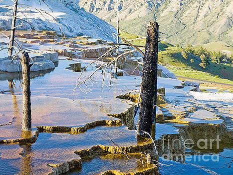 Yellowstone by Tara Lynn