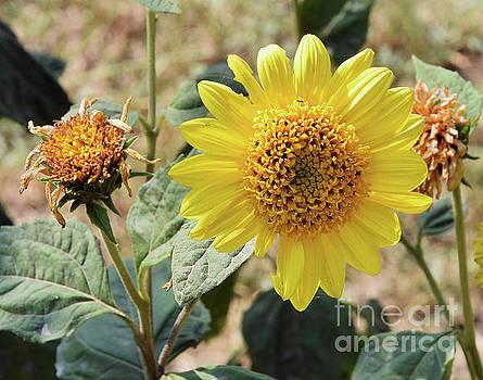 Summer Flower by Elvira Ladocki