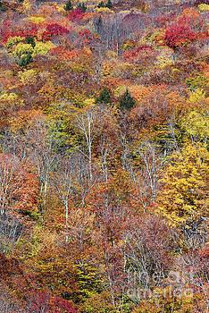 Autumn Forest  by John Greim