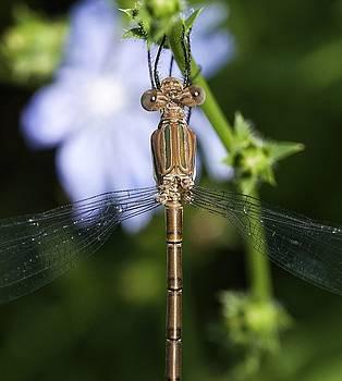 Dragonfly by Nikki McInnes