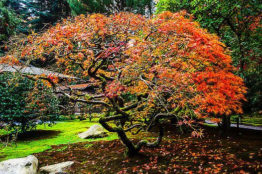 Fall Color - Japanese Maple by Hisao Mogi