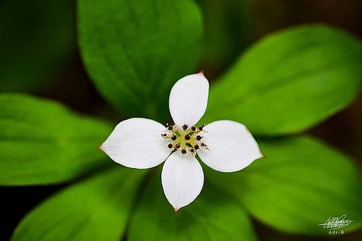 Flower by Adnan Bhatti