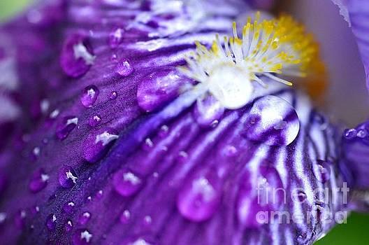 Iris by Sylvie Leandre