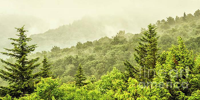 Morning Mountain Mist by Thomas R Fletcher