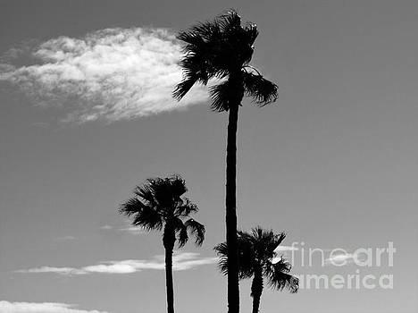 3 Palms by Janice Westerberg