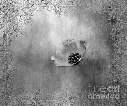 Solitude by Brenda Bostic