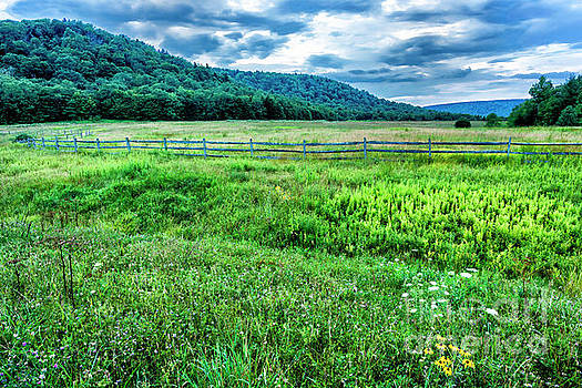Tea Creek Meadow by Thomas R Fletcher