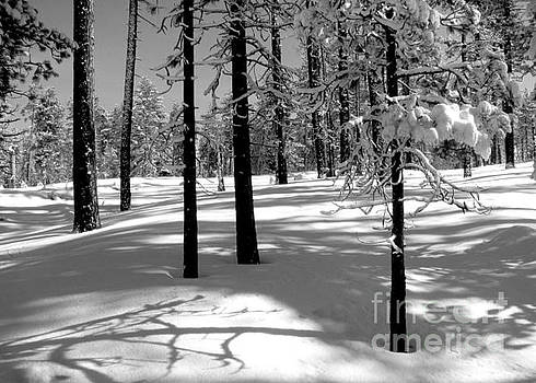 Winter day  by Irina Hays