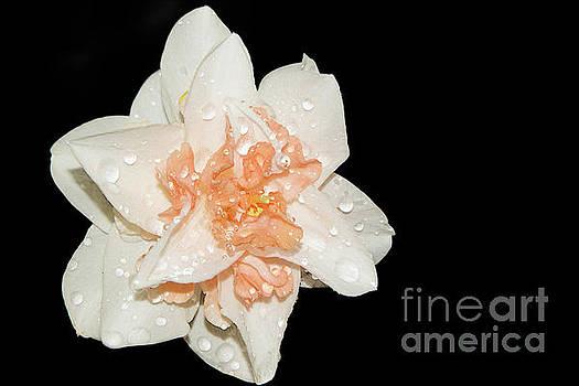 Spring Flower by Elvira Ladocki