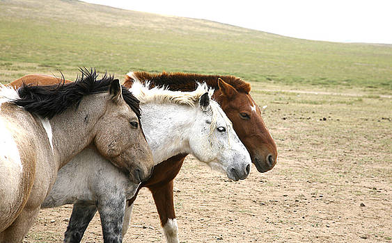 3horses by Marcus Best