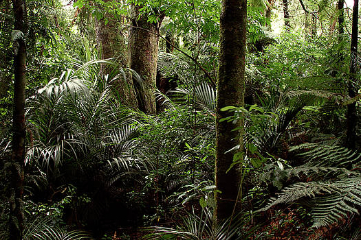 Jungle greenery by Les Cunliffe