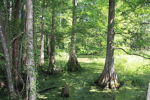 Louisiana Swampland by Angela Moreau