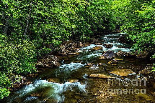 North Fork Cherry River by Thomas R Fletcher