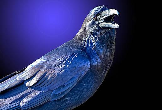 Raven 2 by Brian Stevens