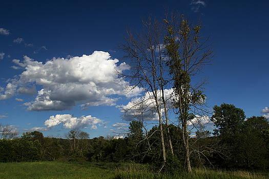 Trees by Amanda Kiplinger