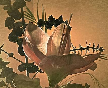 Vintage Amaryllis No. 2 by Richard Cummings