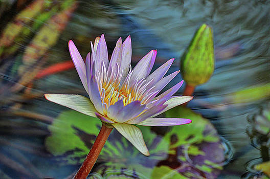 Water Lily by Savannah Gibbs