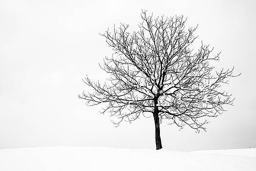 Winter by Ian Middleton