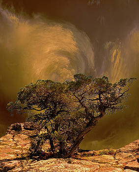 4335 by Peter Holme III