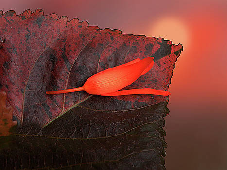 4366 by Peter Holme III