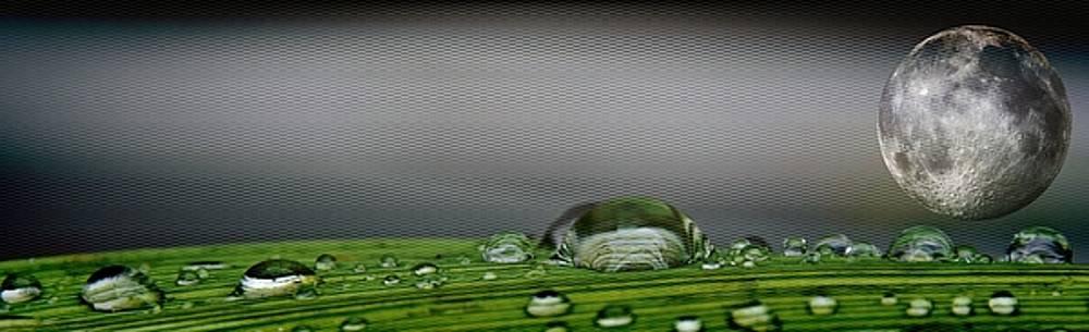 Big Rain Drops On Leaf by Werner Lehmann