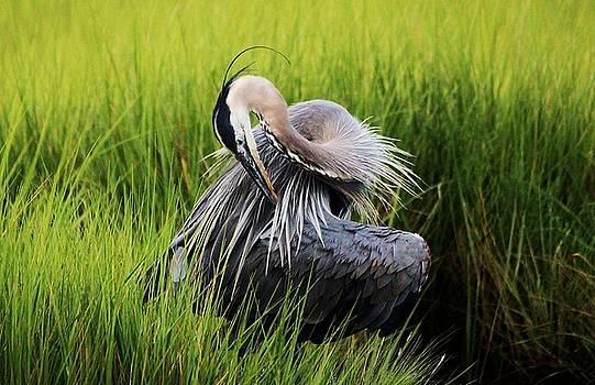 Paulette Thomas - Great Blue Heron in the Marsh
