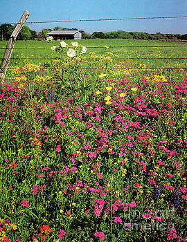 Texas Wildflowers  by Ruth Housley